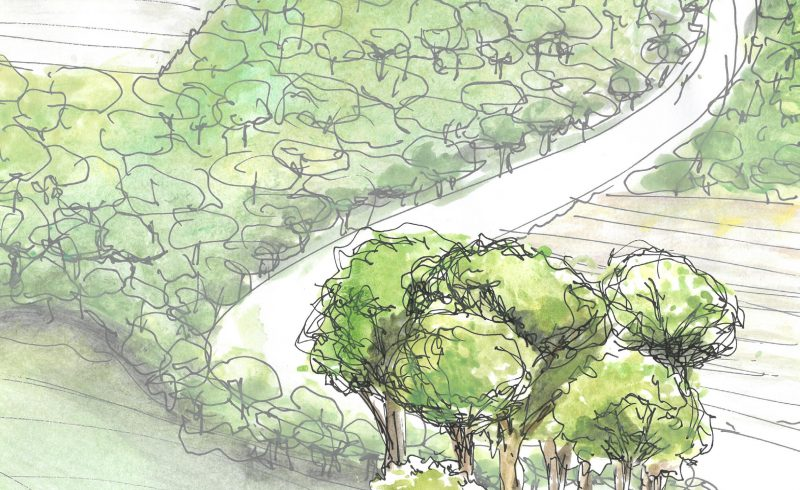Vergelijkende beleidsstudie boscompensatie en de juridische bosdefinitie