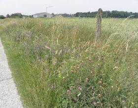 Bermbeheerplan Buggenhout