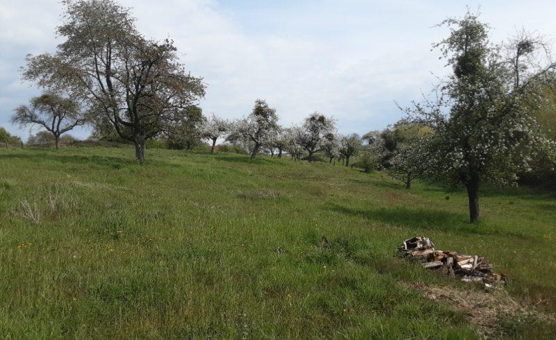 Hoogstamboomgaarden Haspengouw en Voeren