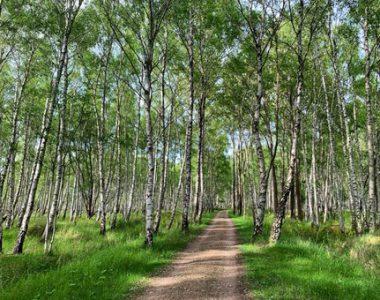 natuur en gezondheid